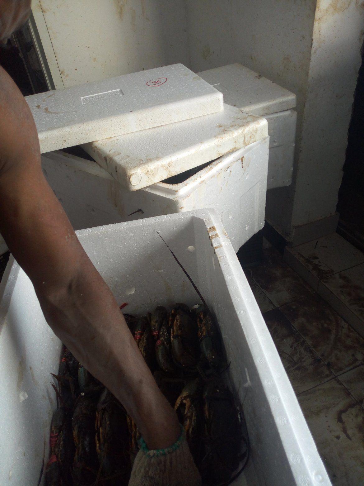 Offer Shrimp  15513410