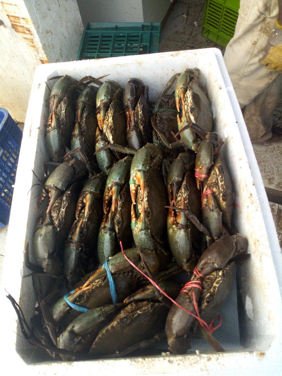 Offer Shrimp  15513412