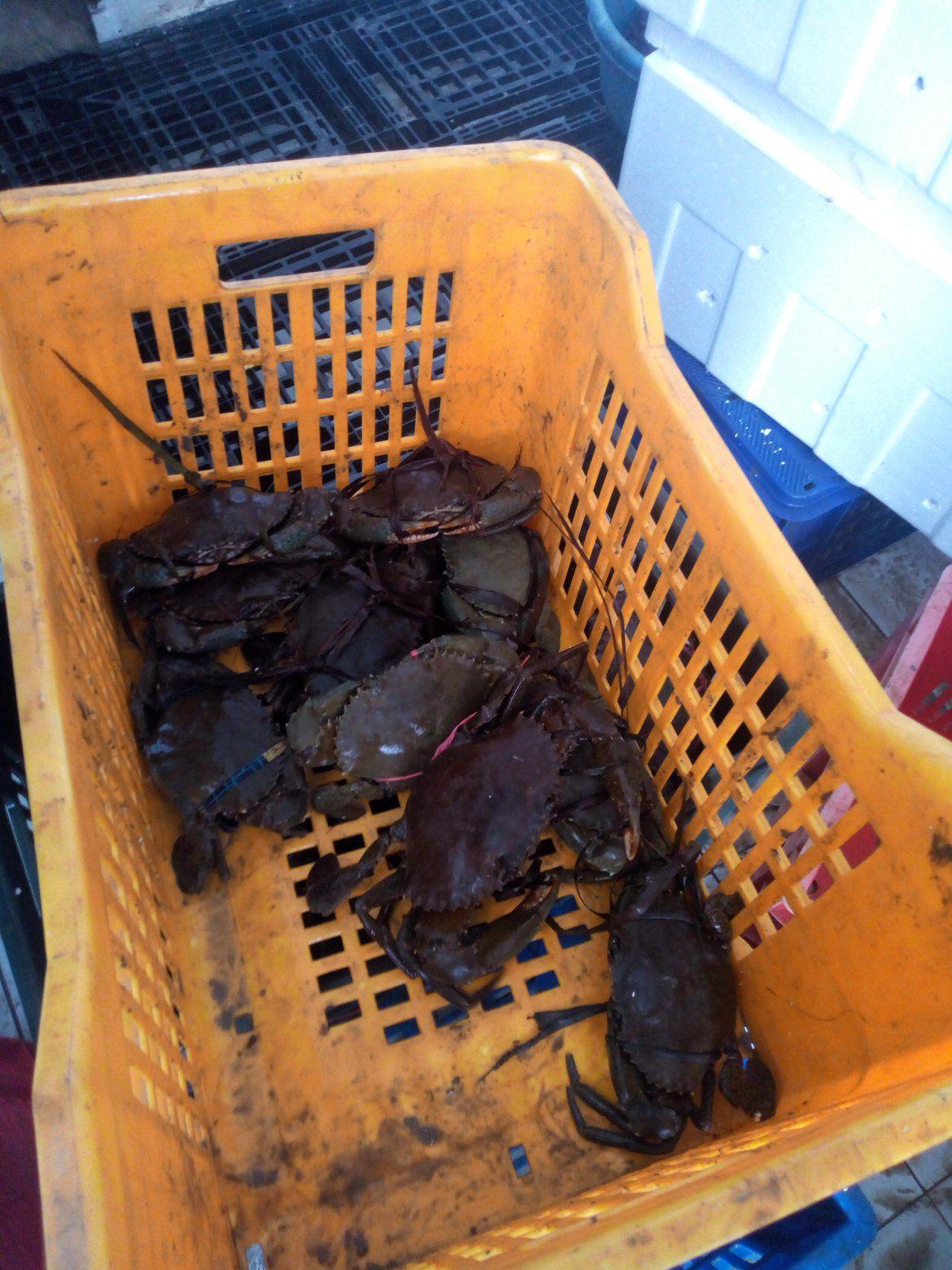 Offer Shrimp  15513413