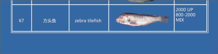 Offer FISH   F06710