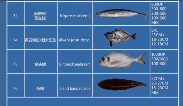 Offer FISH   F07610