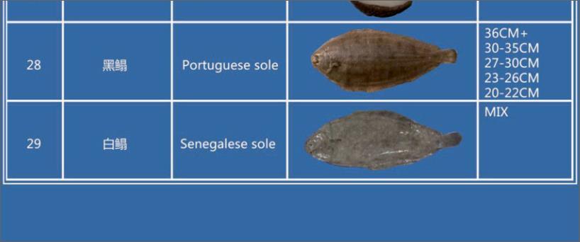 Offer FISH   F_02910