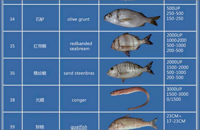 Offer FISH   F_03910