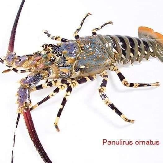 Offer Shrimp  Img-2025