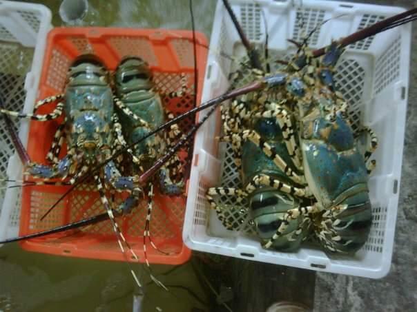 Offer Shrimp  Img-2030