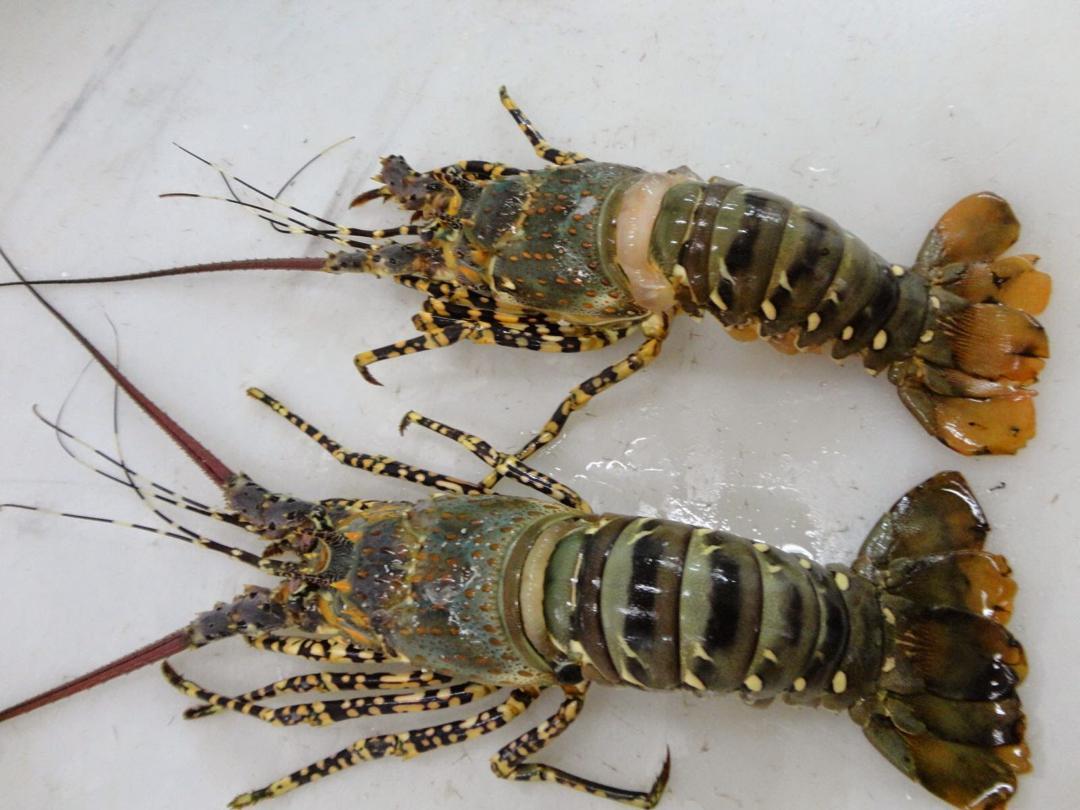 Offer Shrimp  Img-2031