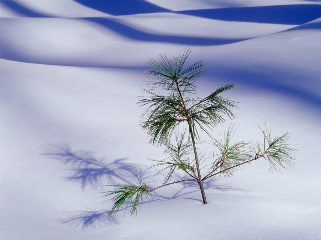 Belles images paysages hivernal  - Page 2 20111210