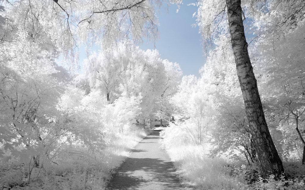Belles images paysages hivernal  - Page 2 20111214