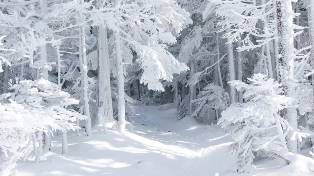 Belles images paysages hivernal  - Page 2 20130110