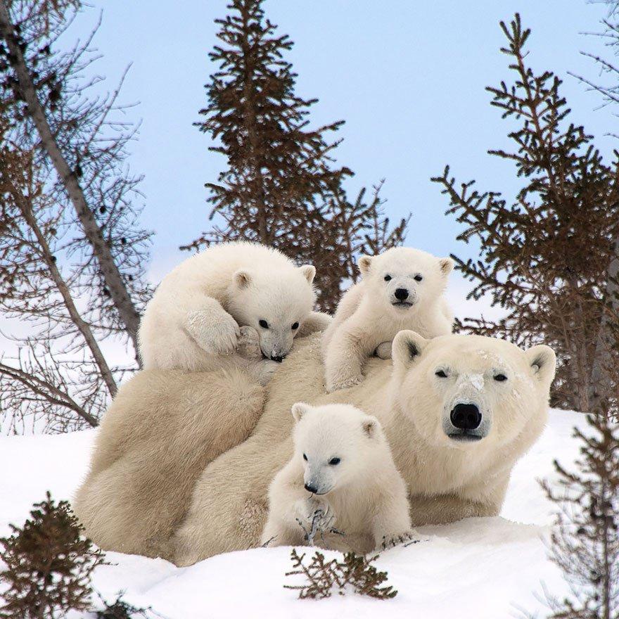 Belles images d'animaux 20910210