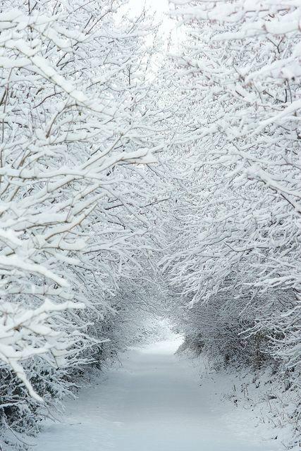 Belles images paysages hivernal  496c0910