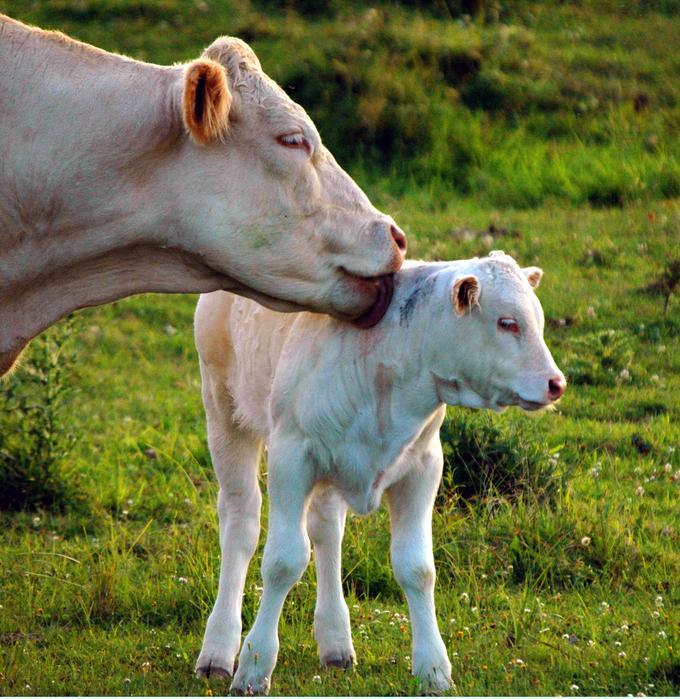 Belles images d'animaux 61040510