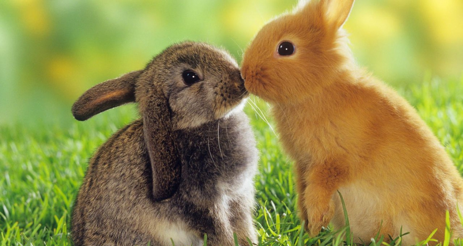 Belles images d'animaux 78846710