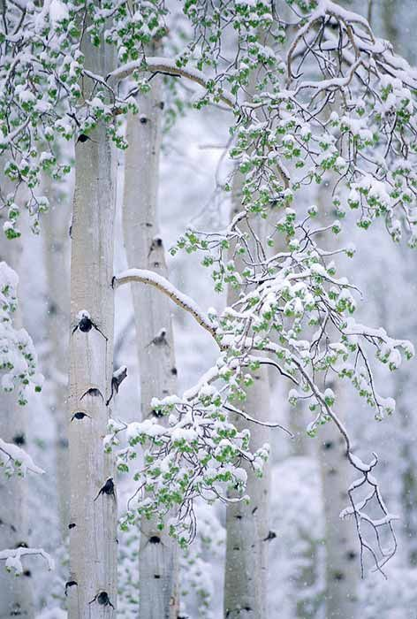 Belles images paysages hivernal  8a5d4810