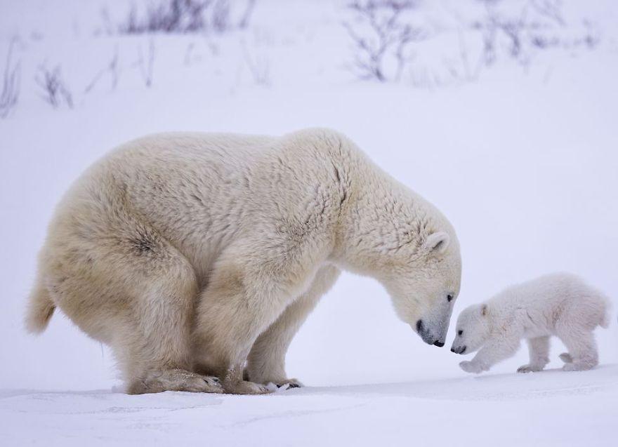 Belles images d'animaux Belles10