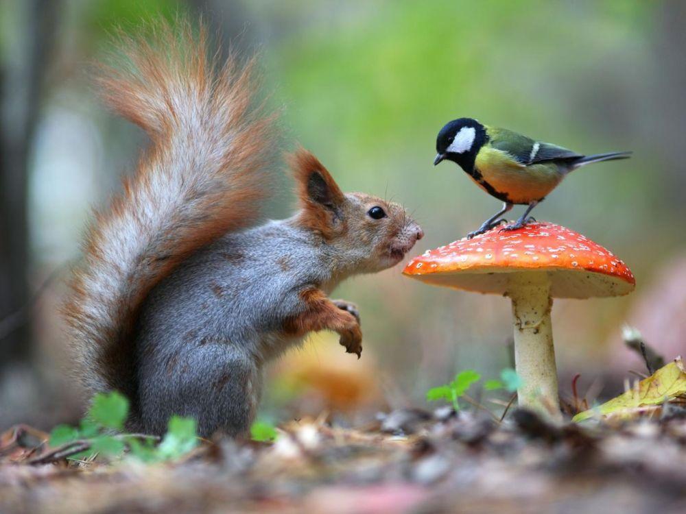Belles images d'animaux Cover-10