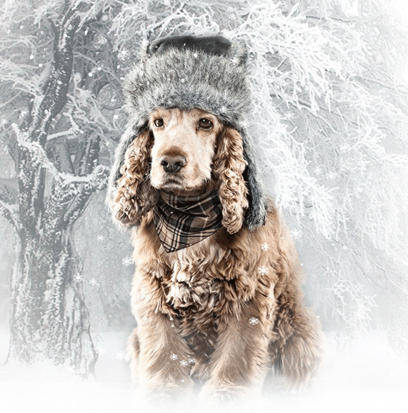 Belles images paysages hivernal  - Page 2 Df033d10