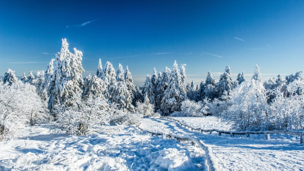 Belles images paysages hivernal  - Page 3 Foret_10