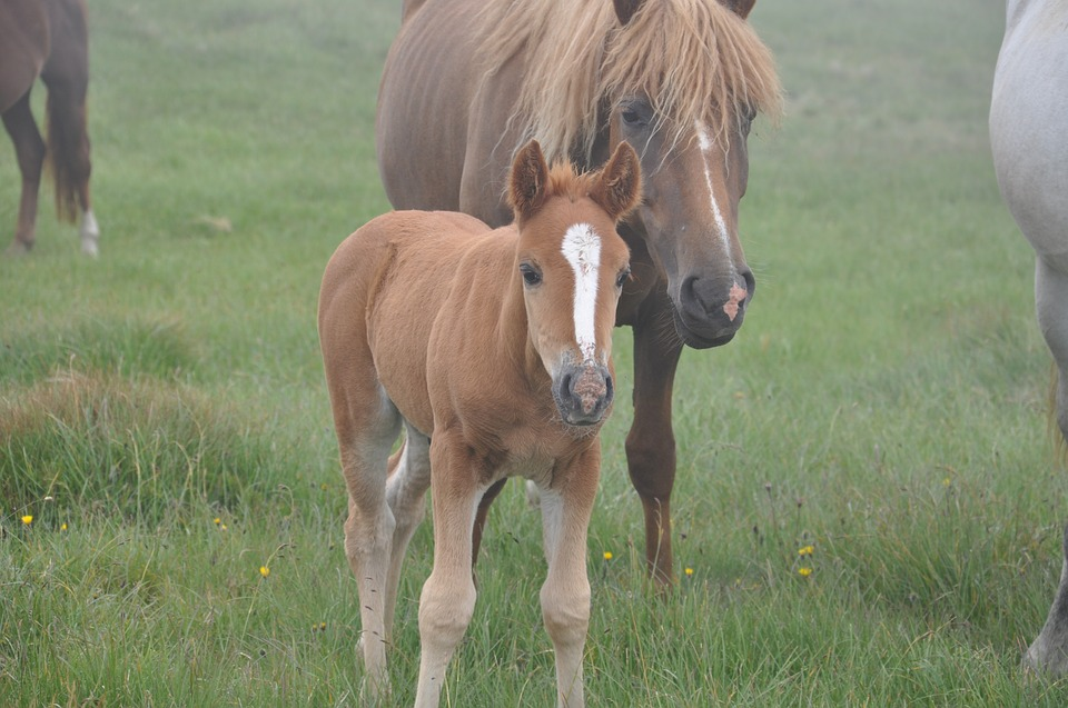 Belles images d'animaux Horse-10