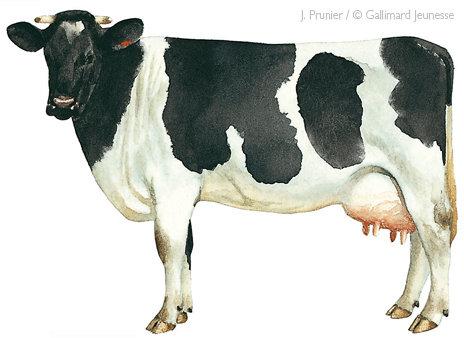 Belles images d'animaux La-vac10