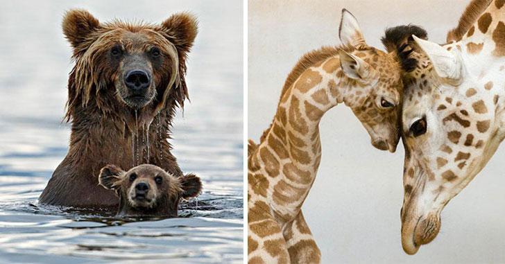 Belles images d'animaux Maman-10