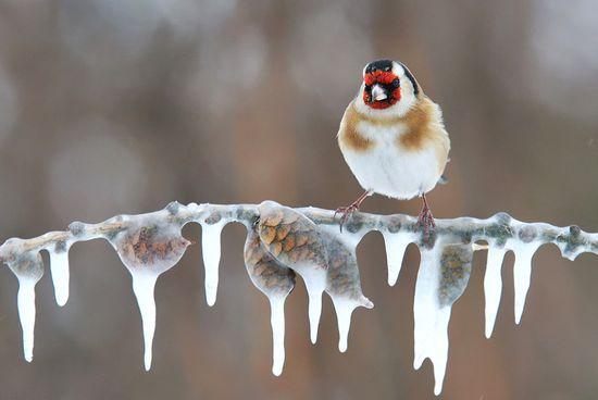 Belles images paysages hivernal  - Page 3 Paysag11