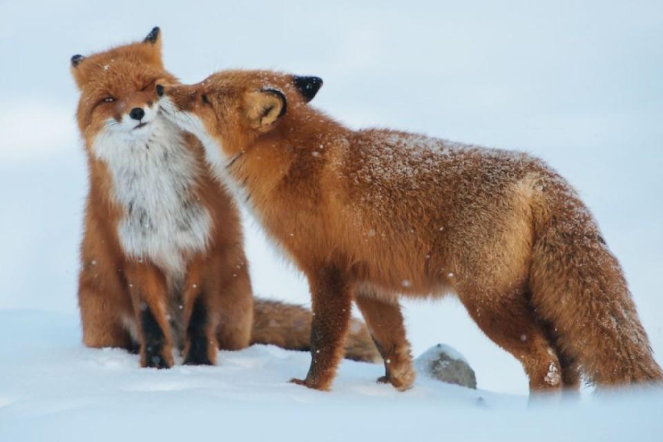 Belles images d'animaux Php7st10