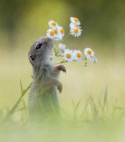 Belles images d'animaux Se-dre10