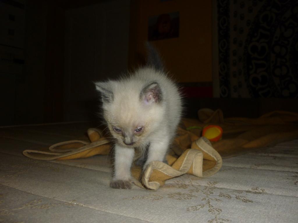 Cat Néo  P1090717