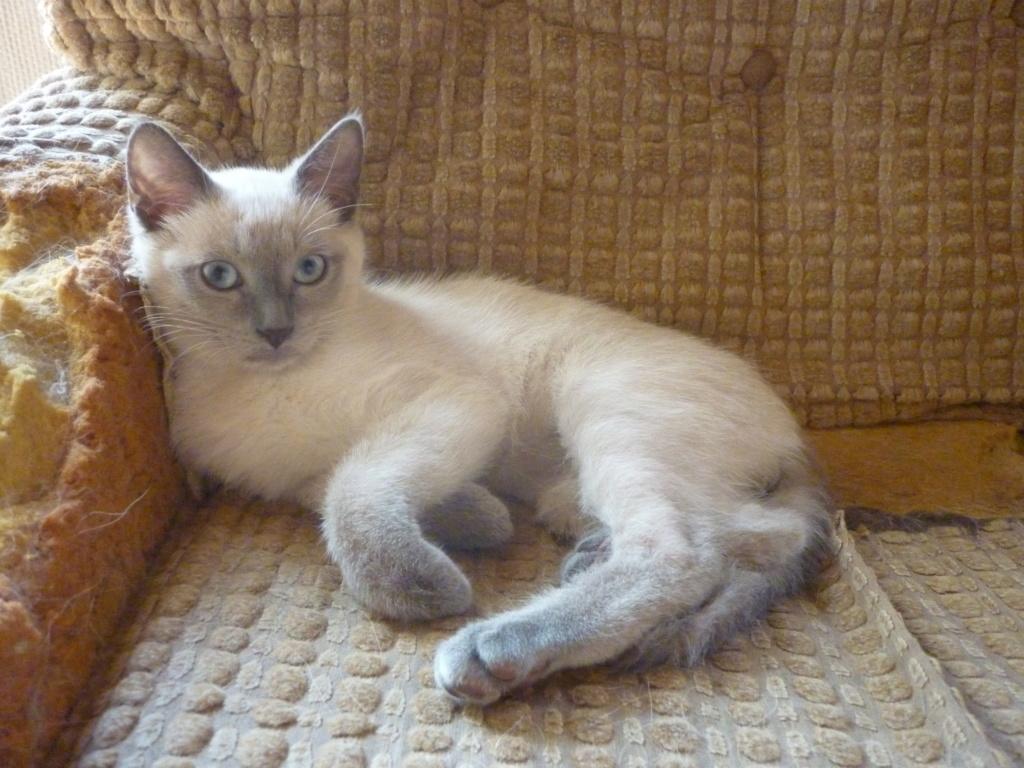 Cat Néo  P1090812