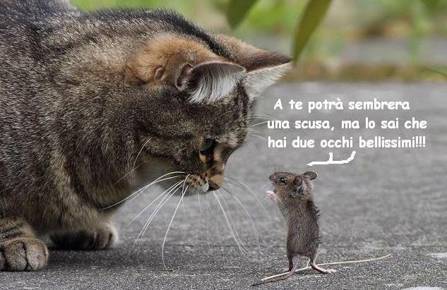 L'Amore per gli ANIMALI - Pagina 2 Catmou10