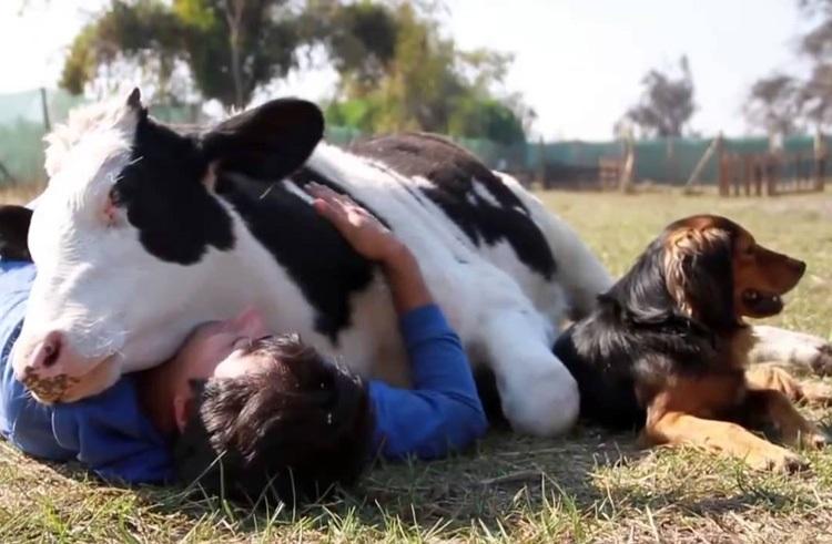 L'Amore per gli ANIMALI Cowlov10