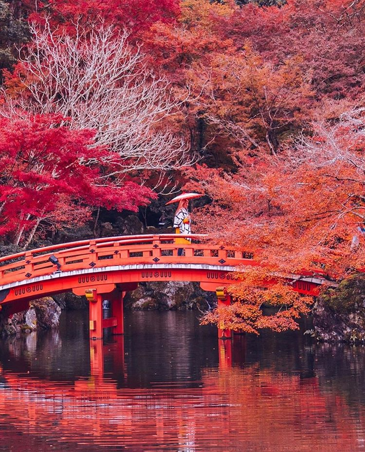 ... è , sarà autunno ...  Fall_i10