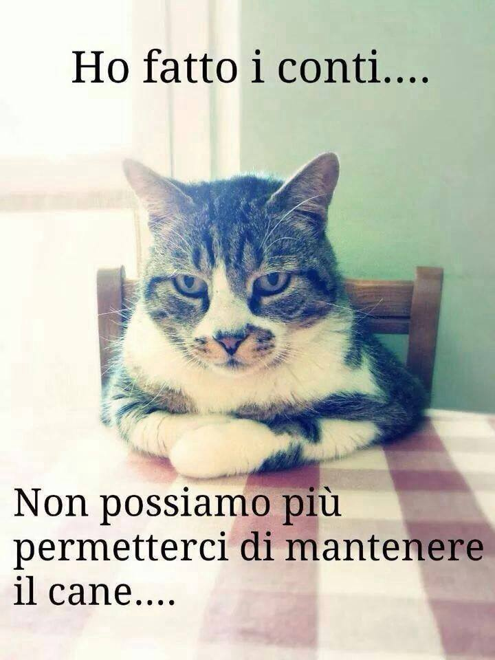 Ridiamoci su... Ff-cat10