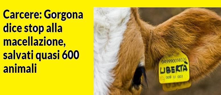 L'Amore per gli ANIMALI Gorgom10