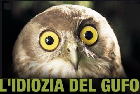 Cinema e dintorni Owl-id10