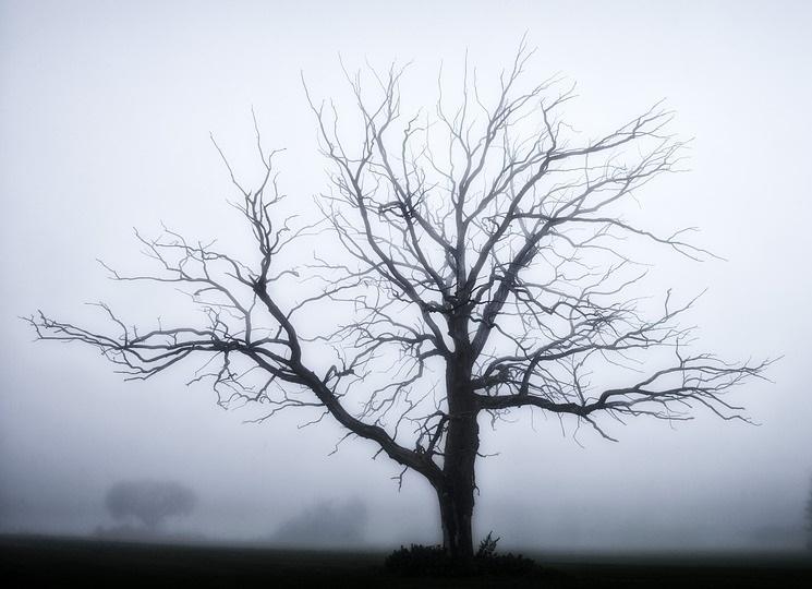Fotografia , che passione ... - Pagina 5 Tree-s10