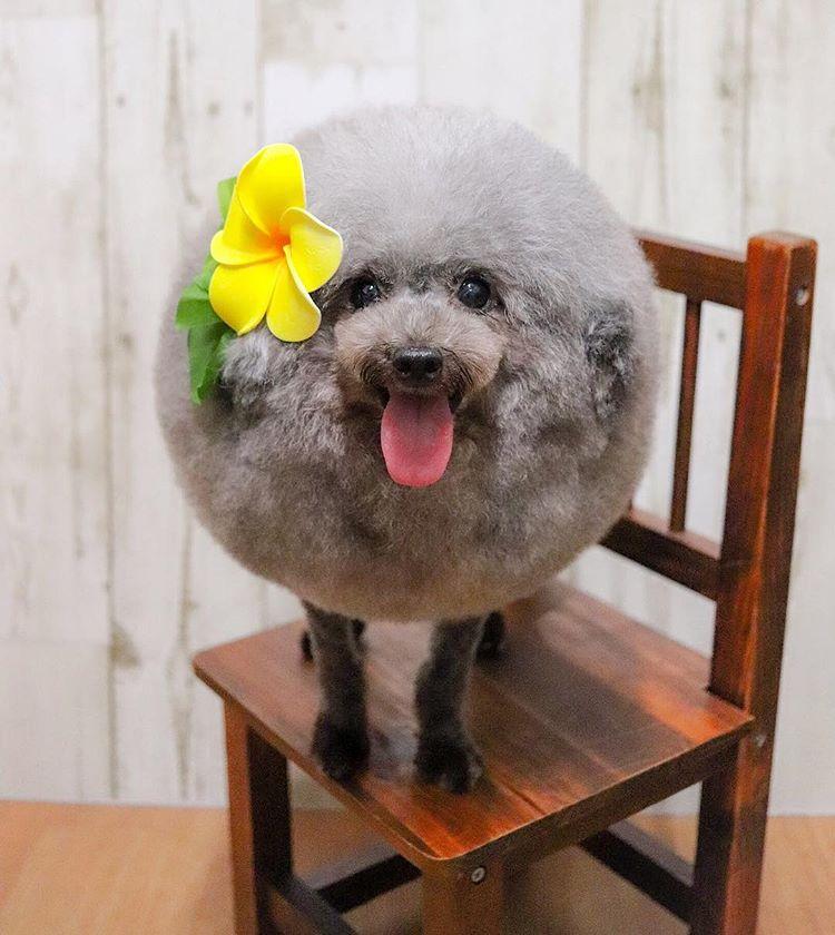 L'Amore per gli ANIMALI - Pagina 8 Tsu_mi10