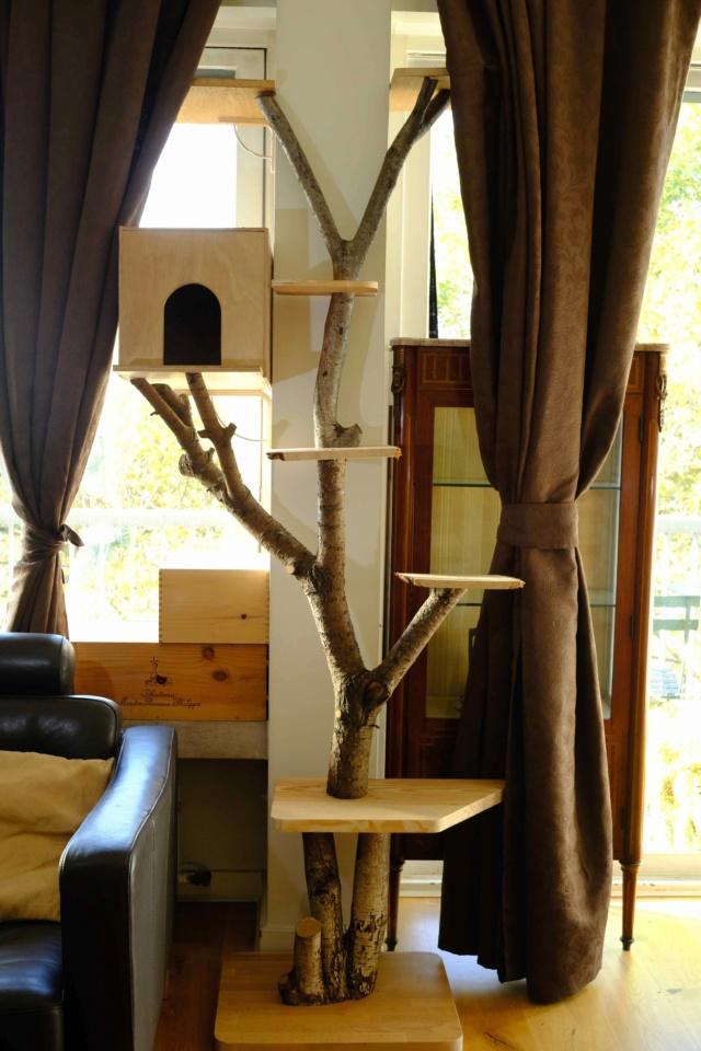 Pour les amoureux des chats....un arbre à chats! Ext20411