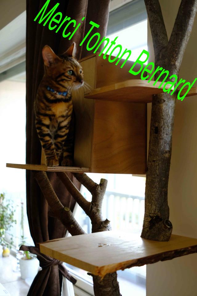 Pour les amoureux des chats....un arbre à chats! Ext20412