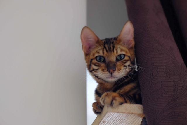 Pour les amoureux des chats....un arbre à chats! Mxt20410