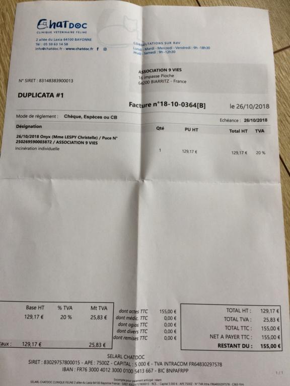 incinération Onyx ( chatdoc )  8e5dae10