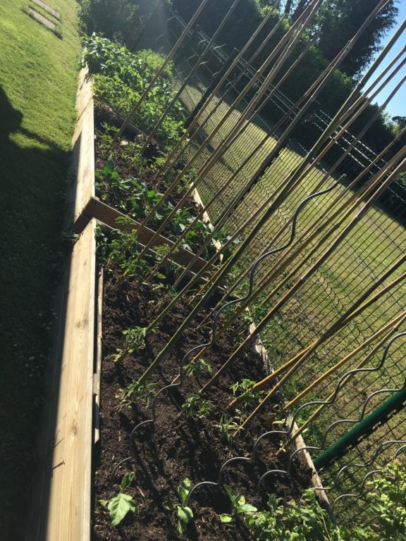 "Jardinage en permaculture ""lasagnes"" Img_5931"