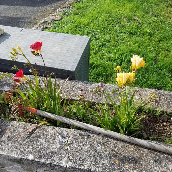 Que se passe t'il au jardin? - Page 9 Fleurs10