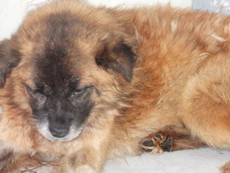 COOKIE2, M-X, petite taille, né env. 2012 (TAMARA) Pris en charge 4 pattes sans toit Cookie10