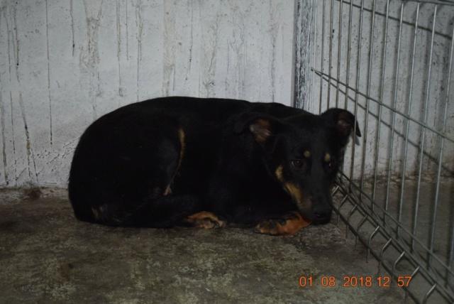 ILONA, F-X, taille moyenne, née 2012 (PIATRA/PENSION) Prise en charge Association Cent Pas Ilona10