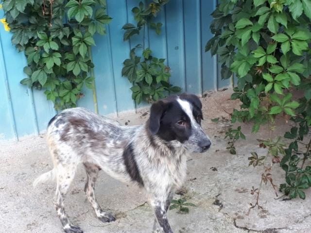 TAMINA, F-X, taille moyenne, née 2015 (PIATRA/pension) un peu timide Recei181