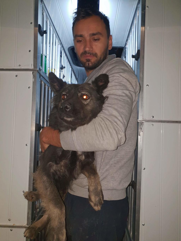 Arrivée du 14 décembre par camion (Roumanie)  Recei518