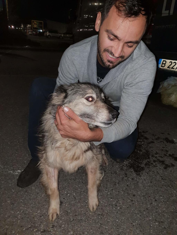 Arrivée du 14 décembre par camion (Roumanie)  Recei523