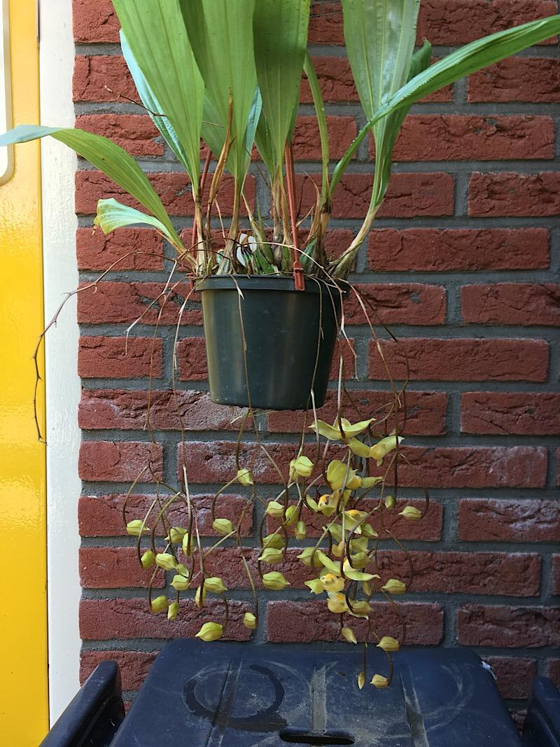 Orchideen-Neuzugang 2 - Seite 21 4b4f0110